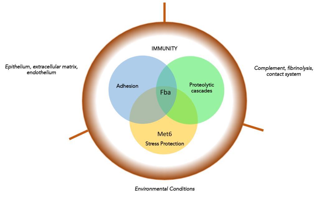 Fba Venn Diagram